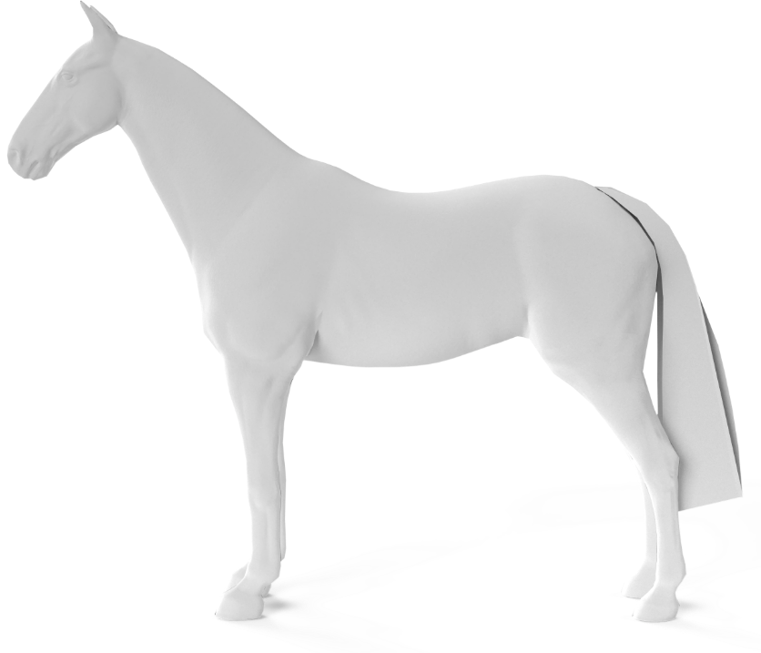 Adult horse